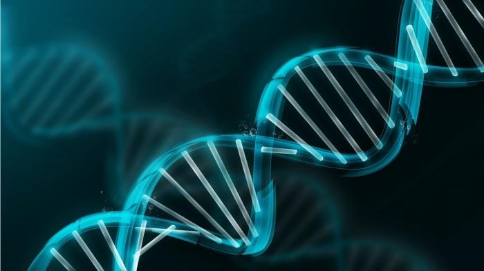 DNA GMOs