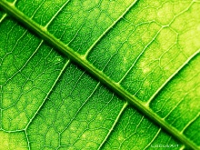 green_leaves_macro_hd-wallpaper-214434