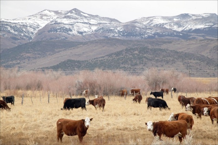 cattle-ranch-sierra-nevada-mountains